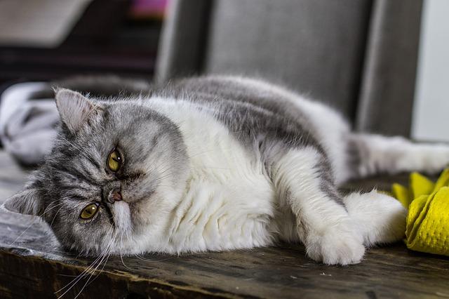 Как отучить кошек лазить по столам