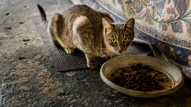 Можно ли кормить котенка кормом для кошек?