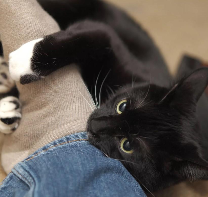 Почему котенок кусается