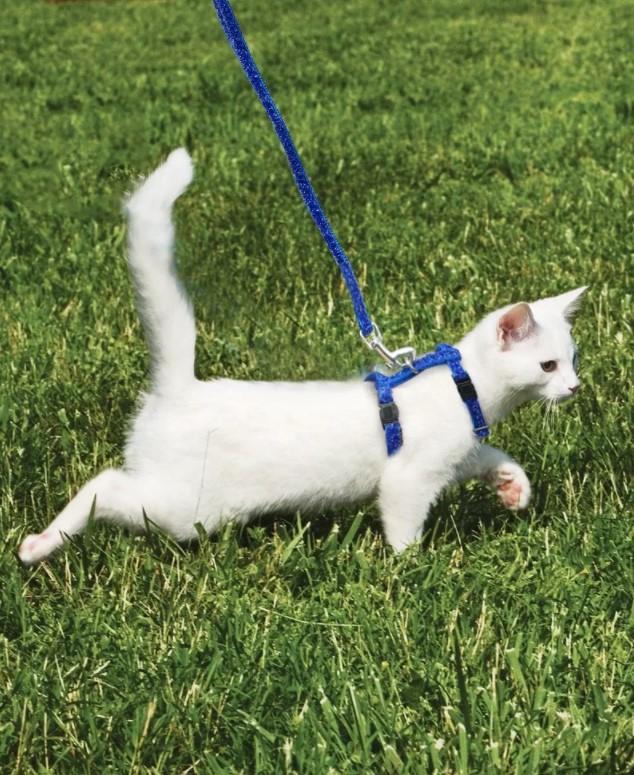 Как одеть шлейку на кошку