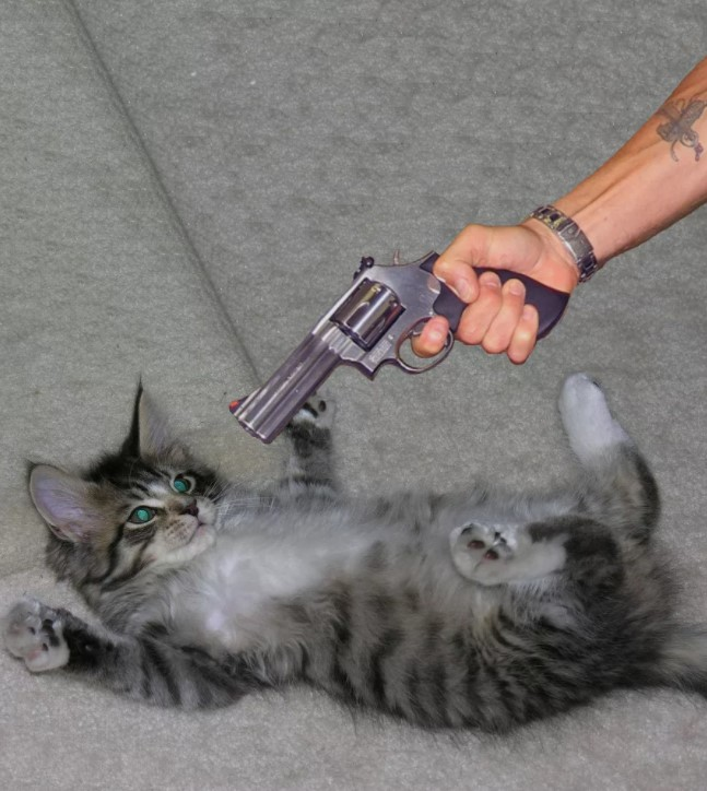 Почему кот метит в квартире