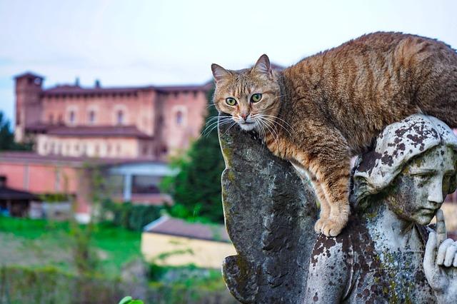 фото: Кельтская кошка