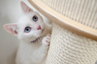 Как приучить кота к когтеточке